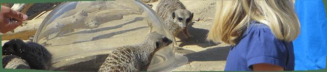 Meerkat Experience 2