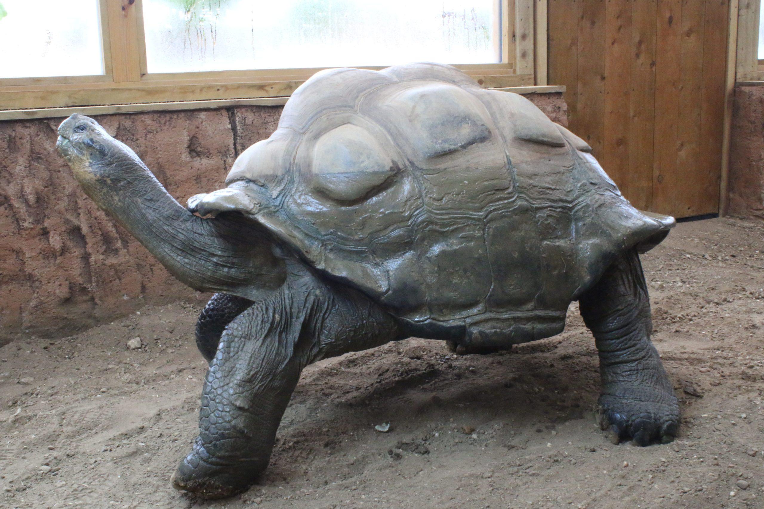 Giant Galapagos Tortoise Experience